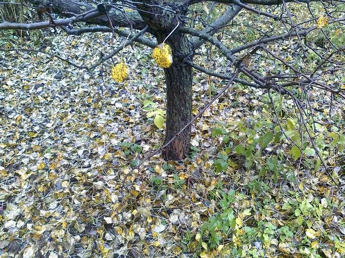 Нужно ли перекапывать почву под деревом в саду?