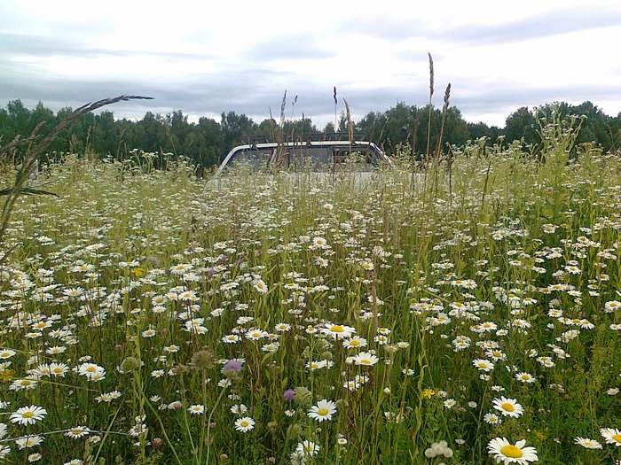 Машина в траве thumb