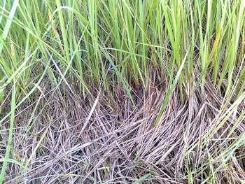 Подстилка травы 1 thumb