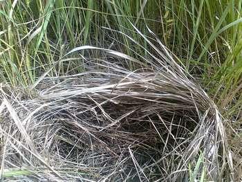 Подстилка травы 2 thumb